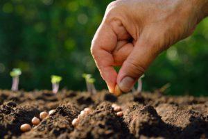 Обработка семян